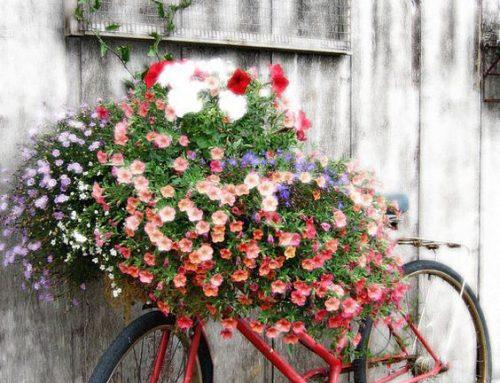 Oprite o plot starý bicykel a urobte z neho neprehliadnuteľný doplnok vašej záhrady.