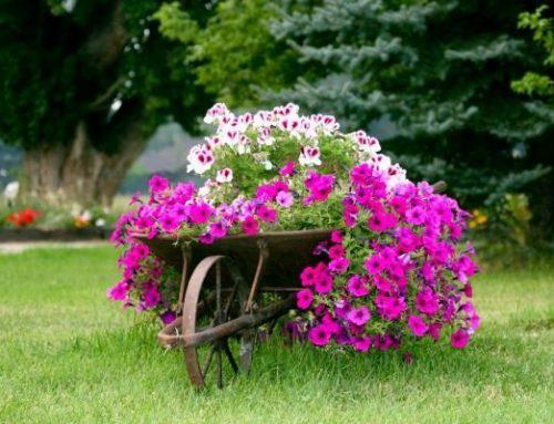 Aj starý rozbitý fúrik môže byť dominanta vašej záhrady. Pozrite si ako!