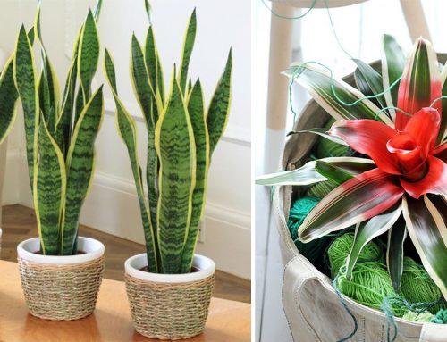 Toto je niečo pre mňa! 12 izbových rastlín, ktoré vám prežijú aj v tom najtemnejšom kúte bytu