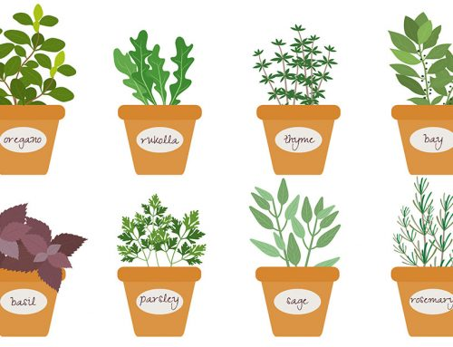 8 byliniek a korenín, ktoré si viete hravo vypestovať v kuchyni. Dajte svojím jedlám novú chuť!