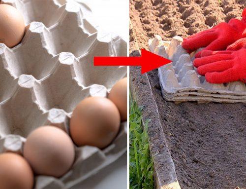 Skvelý tip od záhradkára, ako urýchliť vysádzanie mrkvy, cibule a reďkovky! Toto si určite zabezpečte!