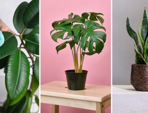 15 izbových rastlín, ktoré čistia vzduch a sú prospešné pre vaše zdravie. Poznáte ich?