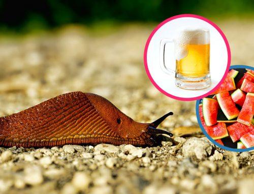 7 spoľahlivých spôsobov, ako zbaviť vašu záhradku otravných slimákov! Vojnu treba začať už skoro na jar