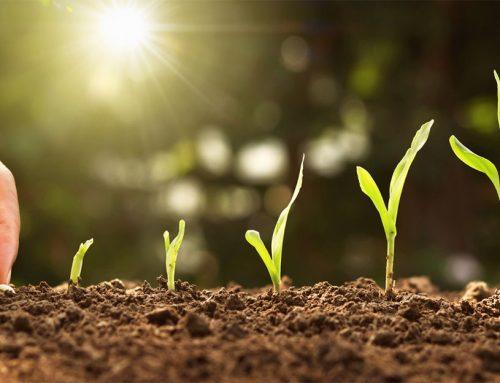 Jednoduchý trik skúsených záhradkárov, ako rýchlo naklíčiť semená. Naučte sa ho aj vy