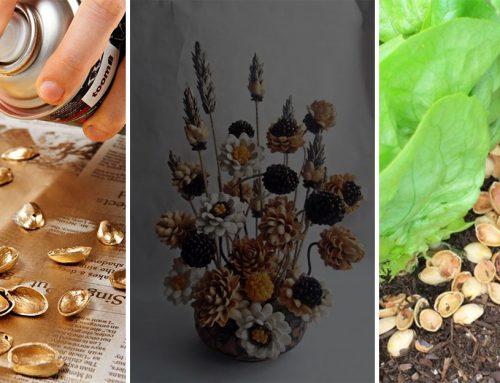 Výplň do kvetináčov, pasca na škodcov a 5 ďalších trikov, ako využiť škrupinky z pistácií