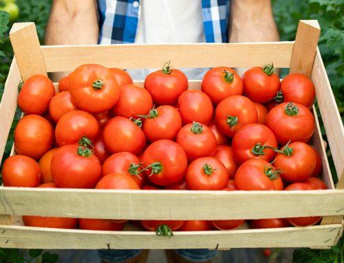 Urodilo sa vám veľa paradajok? Poradíme vám, ako spracovať nadbytočnú úrodu